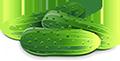 Логотип сайта Огуречная страна