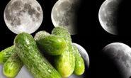 Благоприятные дни для посадки огурцов на рассаду в 2019 году по лунному календарю