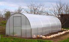 Подготовка теплицы из поликарбоната весной к посадке огурцов