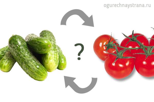 Можно ли сажать огурцы до и после томатов