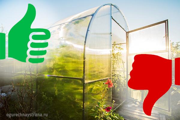 Плюсы и минусы выращивания огурцов в теплице