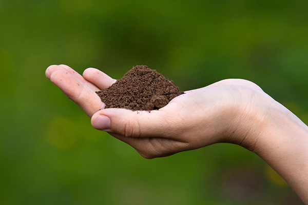 Как подготовить землю для посадки огурцов