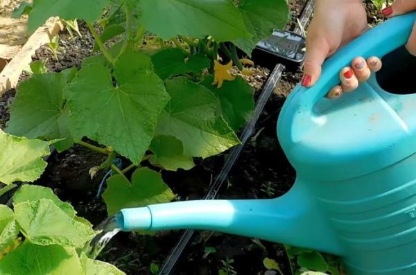 Основные методы полива